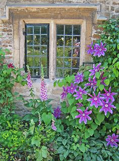 Clematis and foxgloves, Bibury, Cotswolds, uncredited
