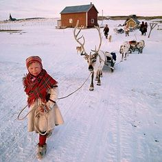 Sami girl leading her reindeer across the tundra.