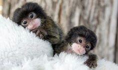 cute monkeys 2