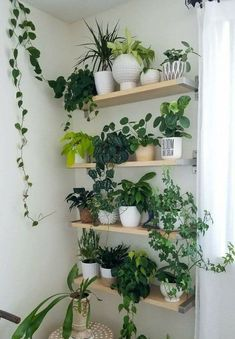 Decor, Plant Stand, Hanging Plants, House Plants Indoor, Plant Decor Indoor, Home Decor, House Design Trends, Plant Decor, Plant Wall
