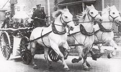 -Chubby and his fire horse team of Engine Company #6, Rochester, New York.