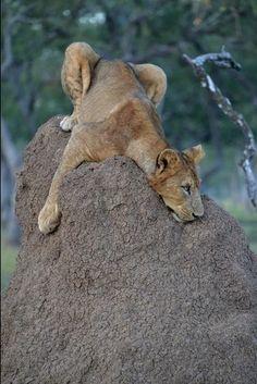 It's been a hard day -- Robin Pope Safaris -- Luangwa River Camp -- Luxury Zambia Safari