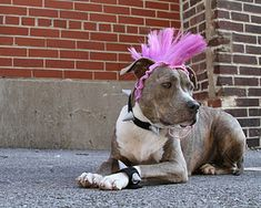 Meet Mac, the rescued pitbull. This is his blog. His mother is CRAZY about him. #pitbull #dog #rescue