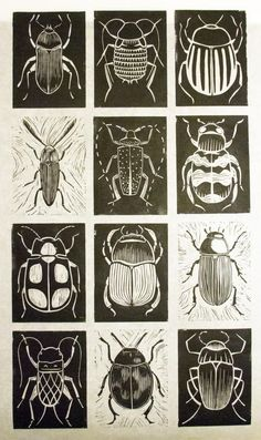 printmaking ideas linoleum scratch art idea Black and white. Chalk and charcoal. Kratz Kunst, Silkscreen, Bug Art, Scratch Art, Insect Art, Beetle Insect, Ecole Art, Linocut Prints, Art Prints