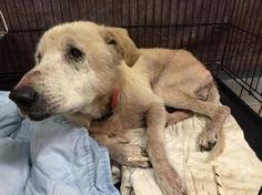 UPDATE Video: https://www.facebook.com/video.php?v=10152382448747073&set=vb.133240727072&type=2&theater | Humane Society in Indiana reached out for help for 2 badly neglected dogs recently removed from a home. The frail dogs, named Freedom & Liberty, are both emaciated & suffer from hair & skin issues. The dogs are in dire need of a full vet work-up & donations are being collected to try & make that happen. The costs needed are beyond the means of the shelter.  (10/17)