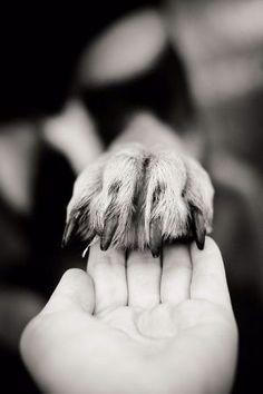 dog stuff,dog ideas,dog care,dog tips,dog grooming Animal Photography, Photography Poses, People Photography, Human Photography, Dog Tumblr, Dog Poses, Dog Runs, Tier Fotos, Dog Care