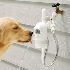 Sonar-Sensing Automatic Pet Fountain - The WaterDog automatic outdoor pet drinking fountain lets your dog help itself to fresh water. Haha wanting this makes me realize how spoiled by puppy is! Handy Gadgets, Cool Gadgets, Tech Gadgets, Pet Water Fountain, Water Spout, Water Faucet, Fountain Cake, Water Bottle, Water Tap