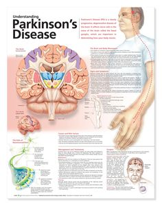 Understanding Parkinson's Disease~good to know this b/c my grandpa has Parkinson's.  <3