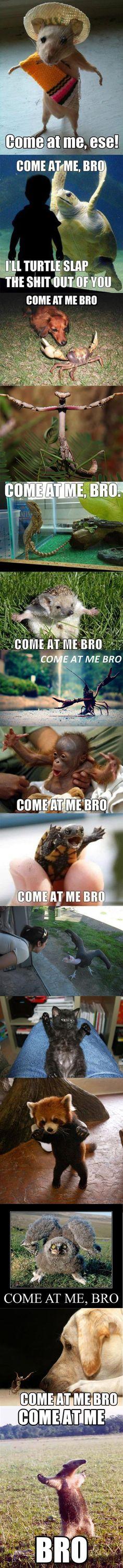 'Come at me Bro' animal compilation…