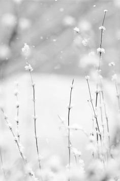 """Snow falling and night falling fast, oh, fast  In a field I looked into going past,  And the ground almost covered smooth in snow,  But a few weeds and stubble showing last....""  ~ from Desert Places by Robert Frost"