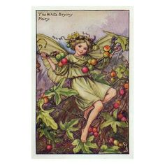 Flower Fairy Prints - White Bryony Flower Fairy Print - Cicely Mary... ❤ liked on Polyvore featuring fairies