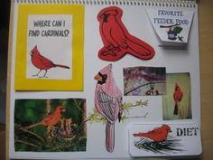 Backyard Bird Lap/Notebook Bird unit study