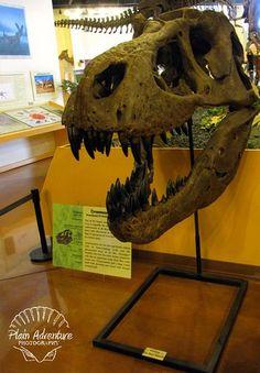 Rocky Mountain Dinosaur Resource Center – Woodland Park