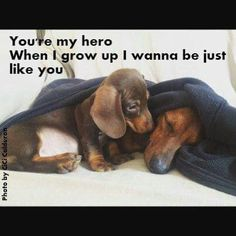 Awesome ! We're proud you like it ! Lets know in case you have problems in anyway , we're willing tohelp : ) Here's my shop ==> https://etsytshirt.com/dachshund #ilovemydachshund