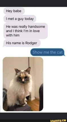 Hey babe I met a guy today He was really handsome and I think I'm in love with him His name is Rodger Show me the cat - iFunny :) Funny Texts Jokes, Text Jokes, Funny Animal Jokes, Crazy Funny Memes, Really Funny Memes, Cute Funny Animals, Stupid Funny Memes, Funny Relatable Memes, Animal Memes