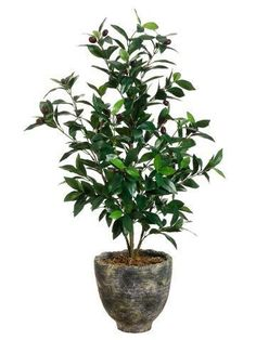 Ideal for adding a lush Mediterranean note to your decor, this faux olive tree is set in a rustic aged planter. Dwarf Olive Tree, Potted Olive Tree, Faux Olive Tree, Potted Trees, Trees To Plant, Fake Trees, Bamboo Tree, Bamboo Plants, Fake Plants
