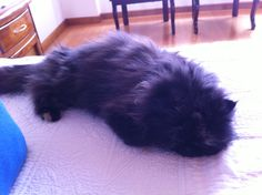 Una pequeña siesta