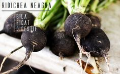 17 Amazing Benefits Of Black Radish For Skin, Hair, And Health, Are you looking for natural remedies that can boost your health and help you look gorgeous at the same time? Have you ever tried 'black Spanish radish' f, Root Vegetables, Fruits And Veggies, Radishes Benefits, Drainer Le Foie, Diy Vitamin C Serum, Digestion Difficile, Weird Fruit, Diet, Plants