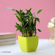 Checkout this latest Indoor Plants Product Name: *Two Layer Lucky Bamboo In Green Pot* Material: Plastic Pack: Pack of 1 Product Length: 5 Inch Product Breadth: 5 Inch Product Height: 6 Inch Country of Origin: India Easy Returns Available In Case Of Any Issue   Catalog Rating: ★4.2 (873)  Catalog Name: Unique Indoor Plants CatalogID_3833710 C133-SC1606 Code: 913-18757943-558