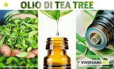 Il Tea Tree oil (olio di melaleuca) è utile per curare molti problemi alla pelle come acne, dermatiti o funghi. Scopriamo tutte le sue proprietà.