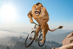 How to be an Animal on the bike