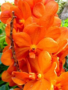 What a gorgeous orchids!