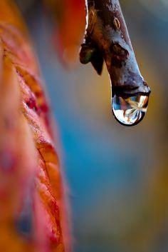 Marble Rain Drop ~ Oregon Rain drops - View on Explore#15 - 1/14/2014 via flickr today