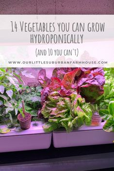 I grow food in my basement year-round, so if you& curious about what you can grow hydroponically, here are 14 things you can grow and 10 you can&