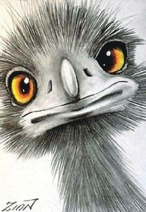 emu drawings - Google Search