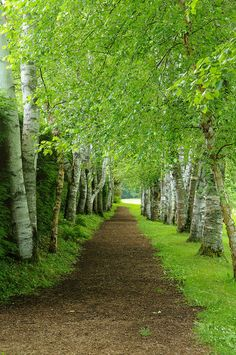 This birch-lined path surrounds the gardens. Walking it will give you a moment to prepare for the beauty that you'll soon see.