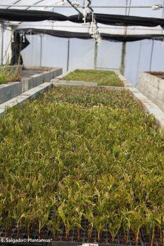Propagación de plantas en Viforsa, S.L. Plantamus®