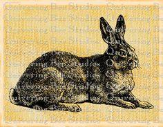 Rabbit Hare Bunny Digital Graphic Download-fabric transfers