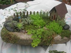 Small Fairy Garden I made last spring at DeMonye's Greenhouse, Columbus, Ohio.  This was a custom order.