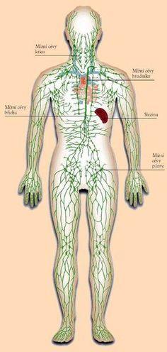 Nefunkční lymfatický systém, to je vstupenka k závažným chorobám. Lymphatic System, Anti Cellulite, Healthy Recipes For Weight Loss, Dry Brushing, Health Care, Health Fitness, Medicine, Health And Fitness, Fitness