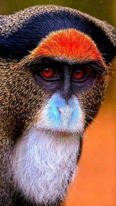 Skeptical primate is skeptical