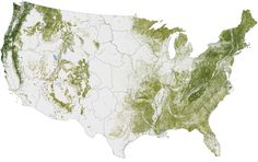 Tree Biomass