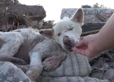 A homeless dog living in a trash pile gets rescued, and then does something amazing