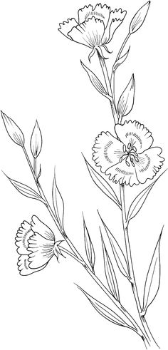 Clarkia-amoena-farewell-to-spring-coloring-page.gif (1316×2740)