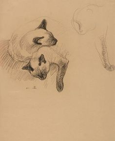 Animalarium: Steinlen's Cats. KittyCommotion.com likes the delicacy of this drawing.