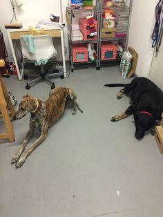 Oliva y Abu de visita en el taller