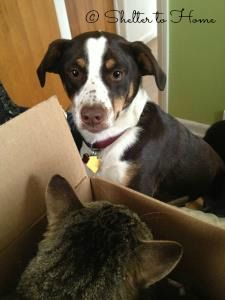 """""""I worried about finding Cora the right toy to comfort her as she settled into our home. But in the end, it was something simple that brought her the most pleasure: a cardboard box.  Of course, I've seen the...  https://www.facebook.com/sheltertohome/photos/a.1112089598817307.1073741846.1020463424646592/1115436801815920/?type=3&theater"""