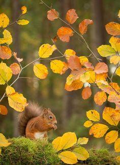 Seasonal wonderment!