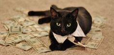 Cats with money on Viral pictures of the day Bizarre Pictures, Budgeting Finances, Cute Animals, Hilarious, Money, Pets, Agios, Bons Plans, Voici