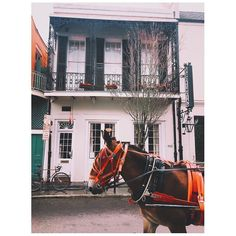 Thanks for such a great picture of our boy Elvis! He's is photographed so much recently. How do you like the red harness? #Repost @traceycook21  french quarter friends #frenchquarter #carriage #neworleans #history