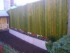 Cañas Tacuara Cercos Bambu Techos Colocacion Sin Cargo - $ 400,00