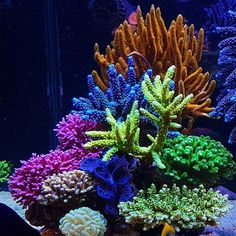 the only person to ever blow us off when we asked them to be a reef pro. Made us even bigger fans! Underwater Creatures, Underwater Life, Ocean Creatures, Underwater Pictures, Saltwater Tank, Saltwater Aquarium, Aquarium Fish, Coral Reef Aquarium, Marine Aquarium