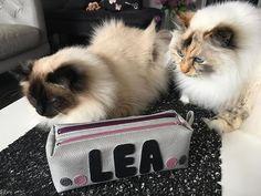 Missange sur Instagram: Et voilà la trousse pour les crayons et les feutres pour la rentrée au cp de ma fille... ☺️ les chats se sont invités lors de la séance…