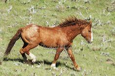 Rock Springs Wild Horses M155475