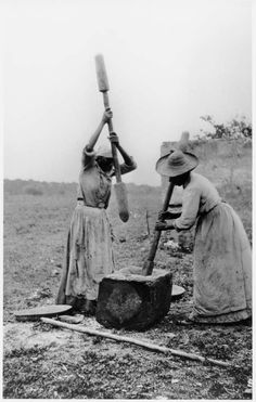 Geechee women hulling rice, Sapelo Island, GA 1900