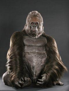 Rick Baker full-size African Mountain Gorilla